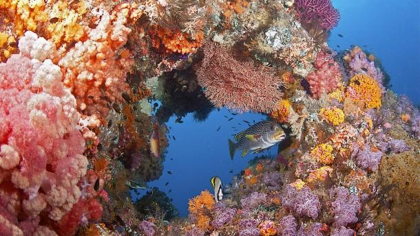 Die Regenwälder der Meere