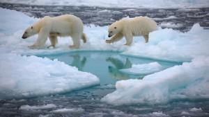 Welche Wirkung hat der Klimawandel auf Tiere?