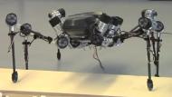 Roboter läuft, sieht und tastet wie eine Heuschrecke