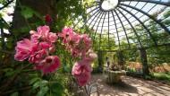 Überragend: Das Rosarium mit dem Rosendom auf der höchsten Stelle des Darmstädter Parks.