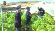 Rekorddrogenfund auf Sizilien