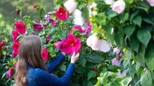 Blütenpracht für einen Tag