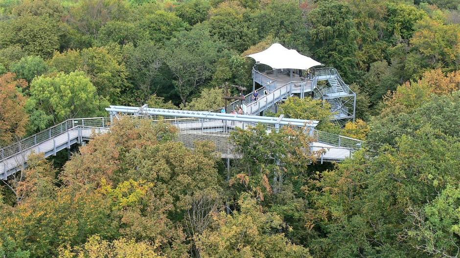 Über 540 Meter schlängelt der Pfad an Buchen- und Eichenkronen vorbei.