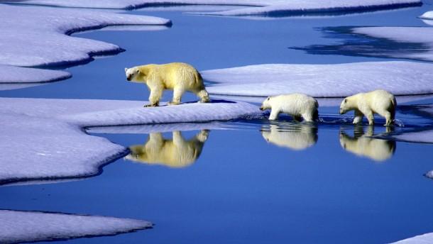 Prima Klima ohne Demokratie