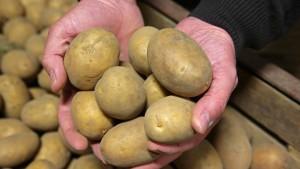 Kartoffeln werden billiger