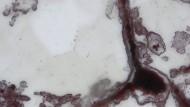 Beweis für vier Milliarden Jahre Leben? Fossilien in blumenförmigen Quartzstrukturen