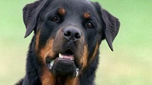Bewährungsstrafe für Hundebesitzerin nach Tod eines Kleinkinds