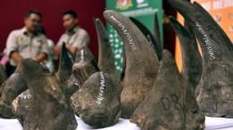 Kein Handel mit Horn und Tigerknochen in China