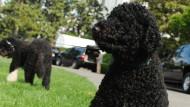 Obamas Hund soll Teenager gebissen haben