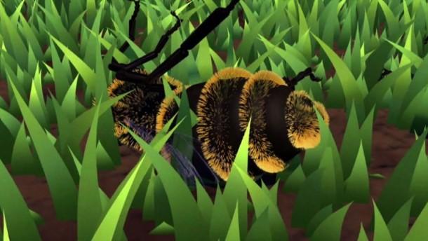 Wie kommt es zum Bienensterben?