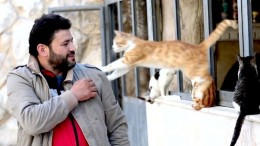 Wo Katzen Asyl bekommen