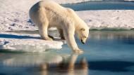 Ein Eisbär steht auf dem Meereis des arktischen Ozeans (Archivbild).
