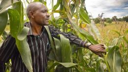 So hart schuftet ein afrikanischer Bauer für seinen Mais