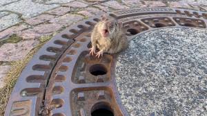 """""""Wir vergiften Ratten, weil sie Schädlinge sind"""""""