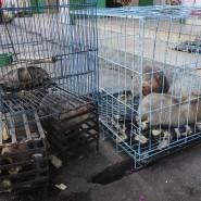Schuppentiere, Tigerhäute, Elefantenstoßzähne: Monga La ist der bedeutendste Umschlagplatz für bedrohte Wildtiere in der Region