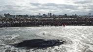 Stumme Zeugen: Buckelwale verfügen zwar über eine eigene Syntax, aber die Kommunikation mit Menschen verläuft - wie im Fall dieses an der argentinischen Küste gestrandeten Tiers - leider immer noch nonverbal.
