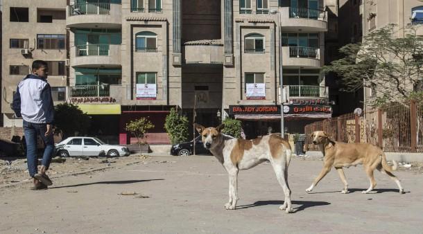 In ägyptens Hauptstadt Vorsicht Tollwütiger Hund