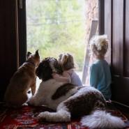 Kinder lieben Tiere - aber dazu gehört auch Verantwortung.