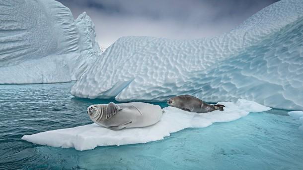 Pandemie erreicht Antarktis