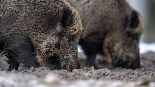 China verbietet Import von Schweinefleisch aus Deutschland