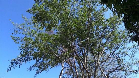 "Kolumbiens ""magische Bäume"""