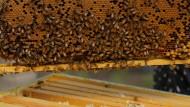 Asyl für drei Bienenstämme am UN-Hauptsitz