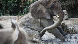 Krieg zwischen Mensch und Elefant