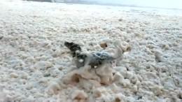 Hund nimmt Schaumbad