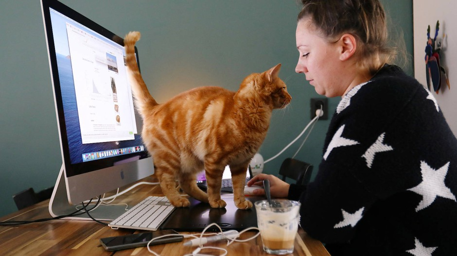 Da arbeitet auch mal die Katze mit.