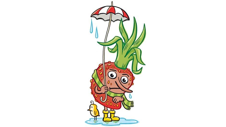 Bauern haben einige pfiffigere Methoden die Erdbeeren vor Regen und Kälte zu schützen.