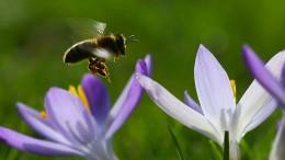 """Bienen und das """"Problem des Handlungsreisenden"""""""