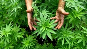 Erlaubt Kalifornien Cannabis zum Entspannen?