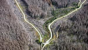 Anlagen in Wälder lohnen sich trotz Klimakrise