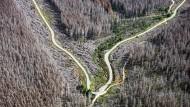 Wälder sind zwar vom Klimawandel gezeichnet, können von ihm aber auch profitieren.