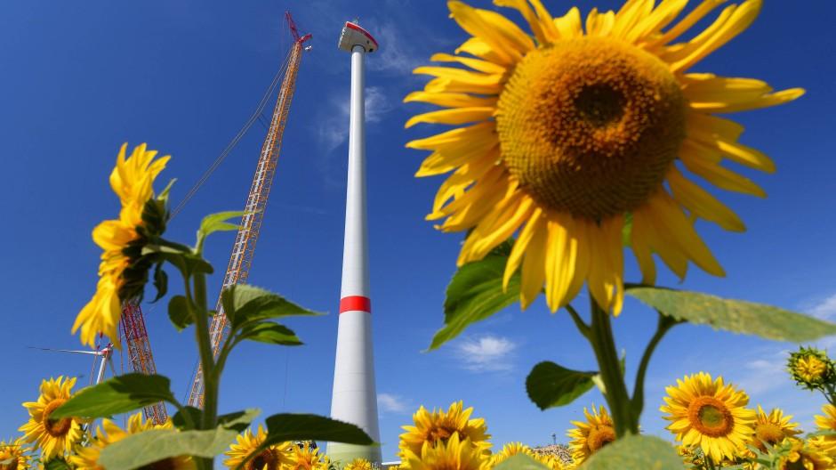Hinter einem Sonnenblumenfeld wird eine neue Windenergieanlage aufgebaut. Mallnow, Brandenburg, 29.06.2018
