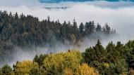 Das Wunder Wald