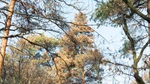 Stadtbäume nicht mit Trinkwasser gießen