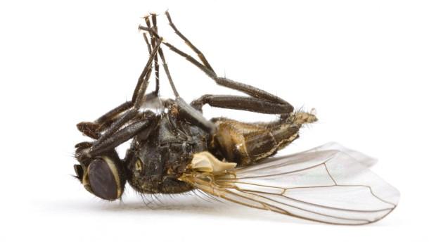 Die Plage mit den Stubenfliegen