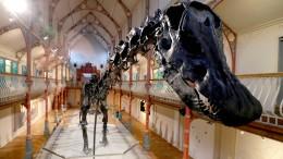 Englische Kirche lockt Besucher mit Rutsche und Dino-Skelett