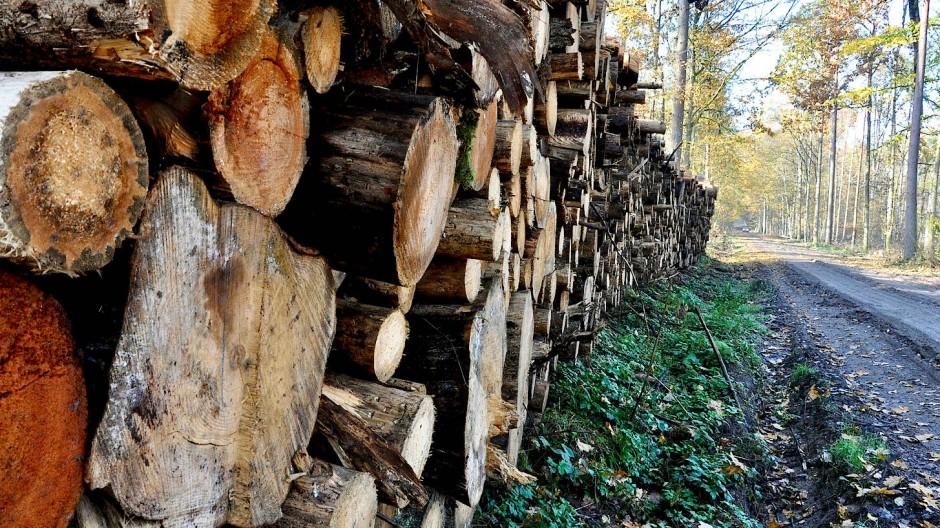 Bereit zum Abtransport: Diese Fichtenstämme sollen aus dem Wald geschafft werden. Zur Sicherheit, wie es heißt.