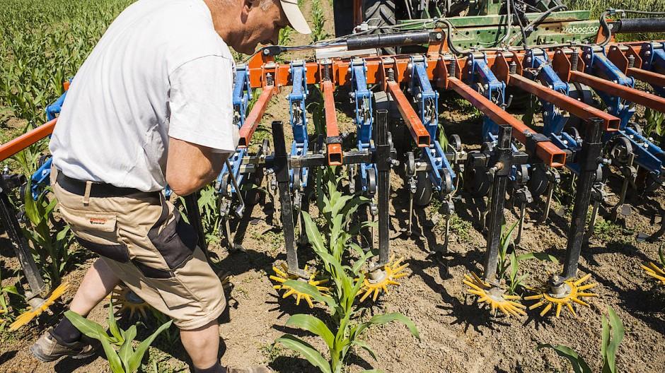 Kampf dem Unkraut: Ein Mitarbeiter der Staatsdomäne richtet die Maishackmaschine ein. Sie verschont die Kulturpflanze und reißt ungewolltes Grün aus.