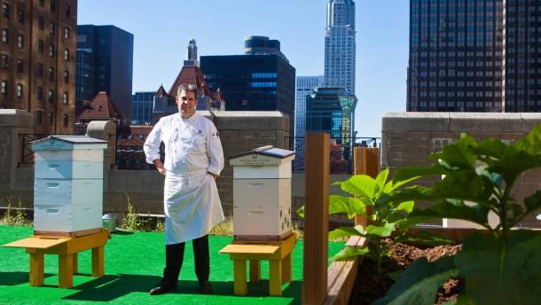 Die Bienen checken im Waldorf ein