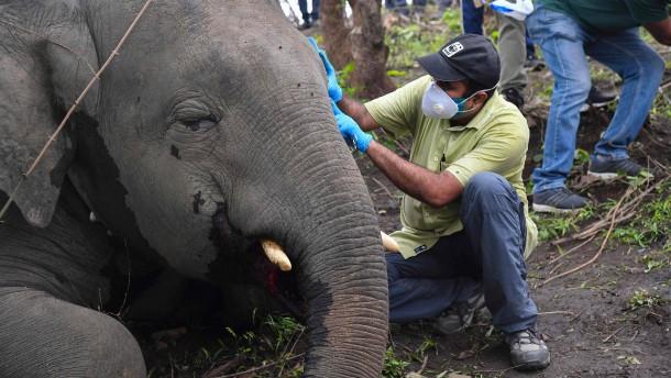18 Elefanten verenden bei Unwetter