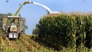Rentable Ernte: Ab den neunziger Jahren wurden Rohstoffe zu einer anerkannten Kapitalanlage
