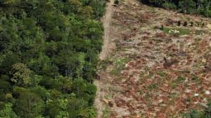 Stoßseufzer vom Regenwald