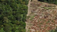 Gerodet wird immer noch: Bei Altamira im Amazonas wurde Regenwald für den Staudamm abgeholzt.
