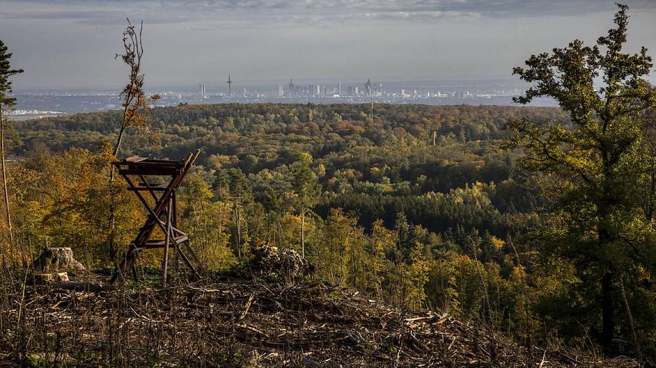 Durchblick: Dieser Hügel zwischen Hohemark und Sandplacken bei Oberursel im Taunus war vor nicht so langer Zeit dicht bewaldet und jetzt kann der Betrachter bis nach Frankfurt schauen
