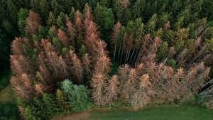 """Warnung vor einem """"Waldsterben 2.0"""""""
