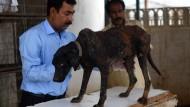 Pakistanische Tierschützer wollen Hunde retten