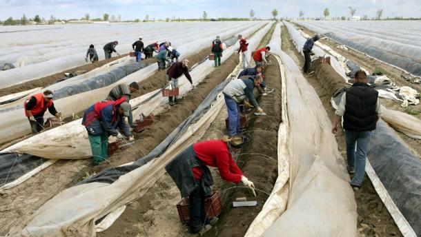 Kindergeld polnische saisonarbeiter bei der spargelernte in sachsen